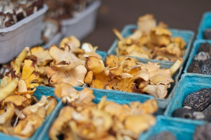 Golden chanterelle mushrooms from The Mushroom Stand